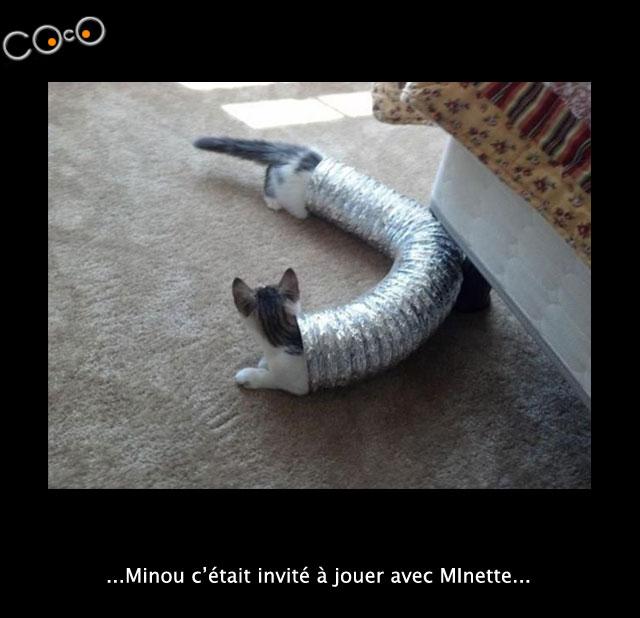 minou-minette