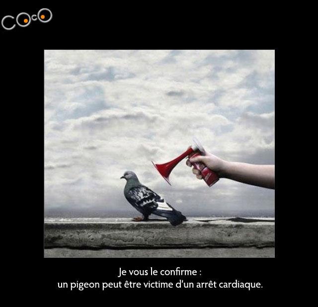 pigeon-cardio